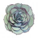 Fustella fiore